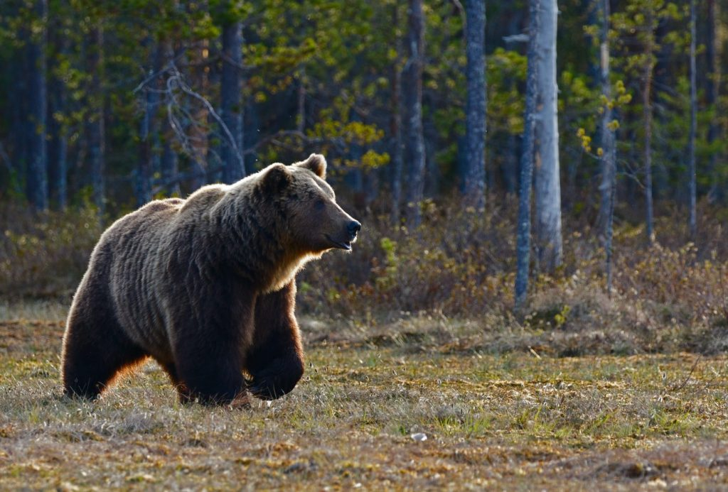 how to store food when camping in bear country