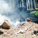 How to Burn Brush in the Backyard