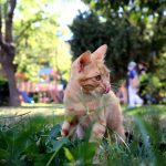 Can I Let My Cat In The Backyard?